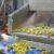Covid-19: 50 κρούσματα σε επιχείρηση στην Χαλκιδική (video)